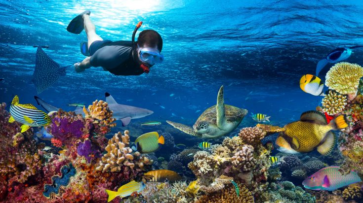 Mnemba Atoll is the most famous place for snorkeling in Zanzibar.