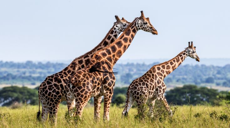 October is the best time to visit Uganda to see the rich wildlife