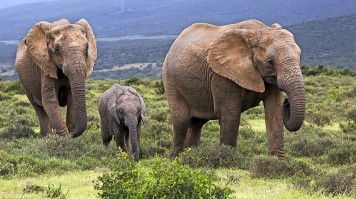 Addo Elephant National Park in South Africa
