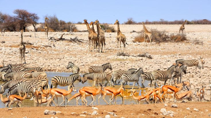 November is a good season to go to Namibia to see the wildlife