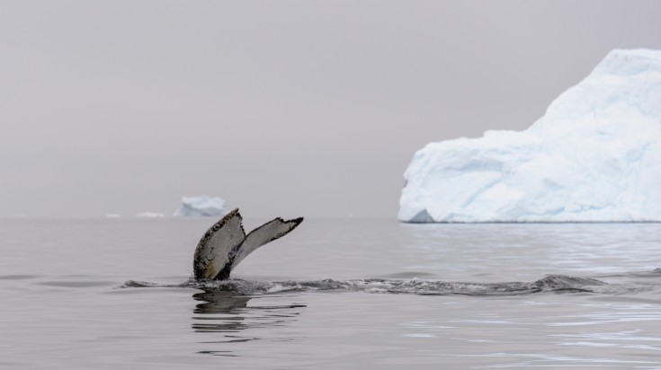 Antarctica in Spring