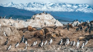 penguins and seals on a boulder with snowcapped mountains in the background