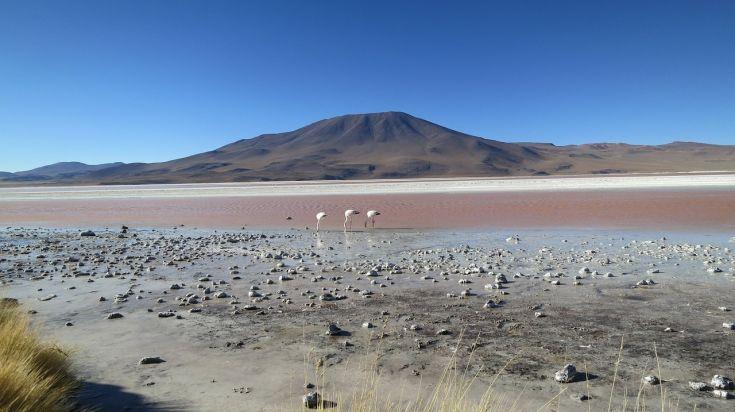 Flamingoes in Salar de Atacama lagoons