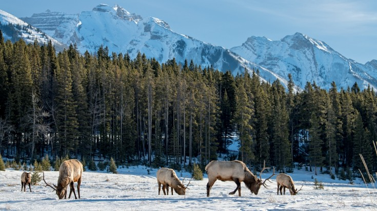 Listed in the UNESCO Heritage Site, Banff National Park is a must visit.
