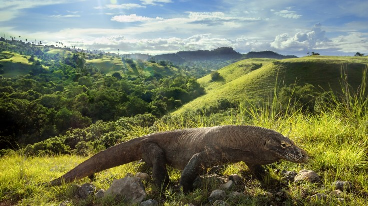 Komodo Island is one of the best places to visit in Indonesia