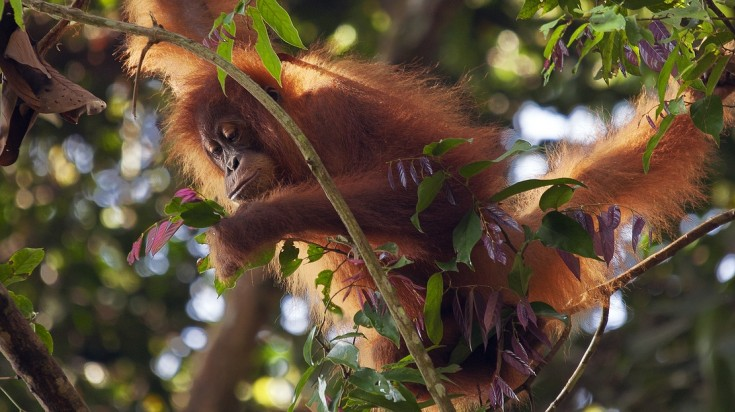 Bukit Lawang is one of the best places to visit in Indonesia