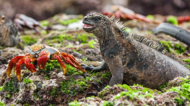 Best romantic holiday destinations Galapagos