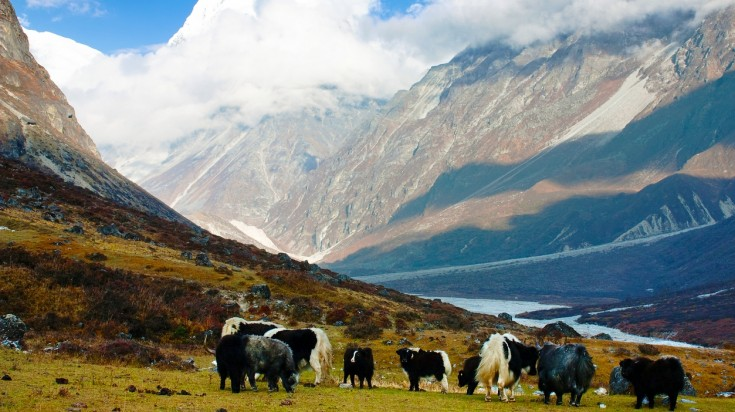 Langtang trek is one of the best trekking route due to its stunning views.