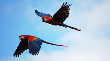 bird watching in Garden Route National Park