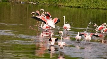 Birdwatching in Garden Route National Park