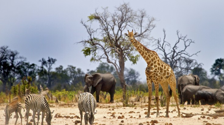 Wild animals in a national park