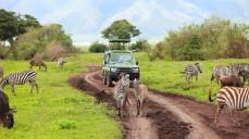 Game drive in a safari