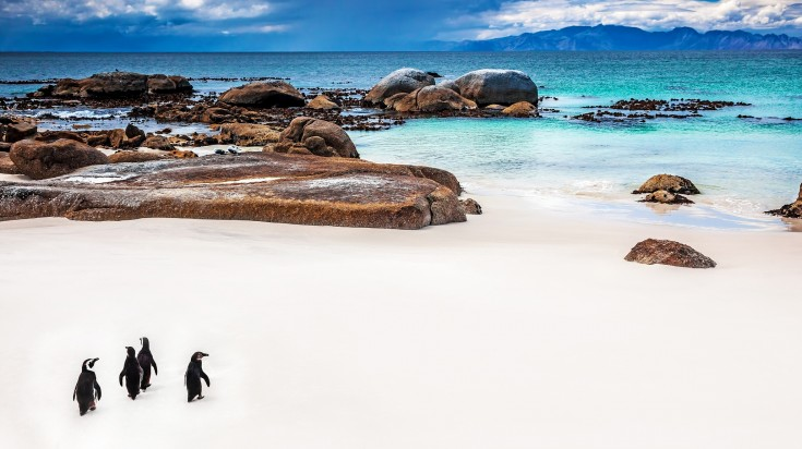 Located in Cape Penisula, Boulders beach should be added in your itinerary.