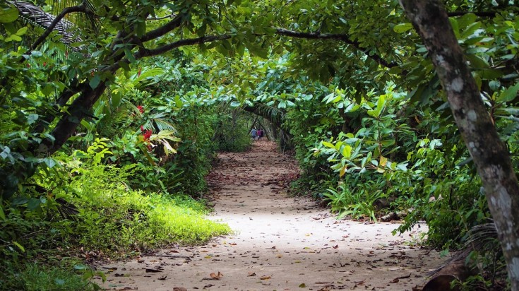Cahuita National Park is situated on a 5 minute walk away from downtown.