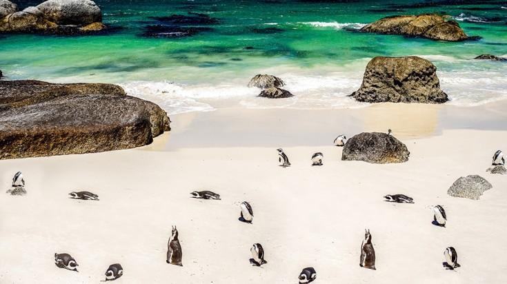 Cape Town boulders beach