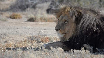 A Safari Near Cape Town in Inverdoorn Game Reserve