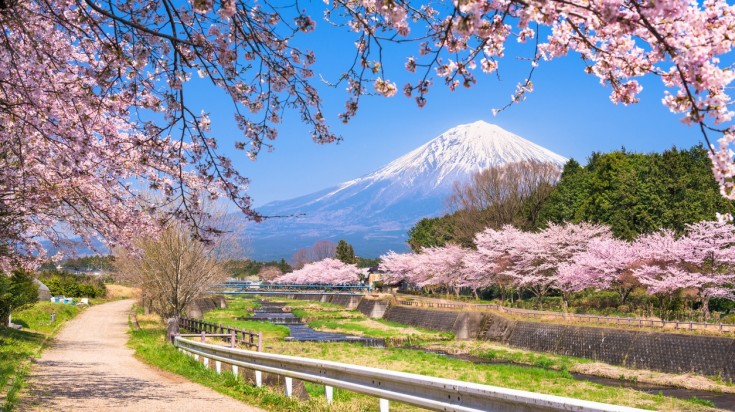 Shizouka Prefecture, home to the mighty Mt Fuji is the best place to experience the cherry blossom festival in Japan.