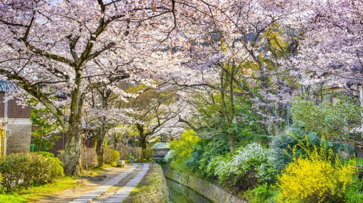 Visit the Philosopher's path near Ginkakuji temple to have the best time during cherry blossom festival in Japan.