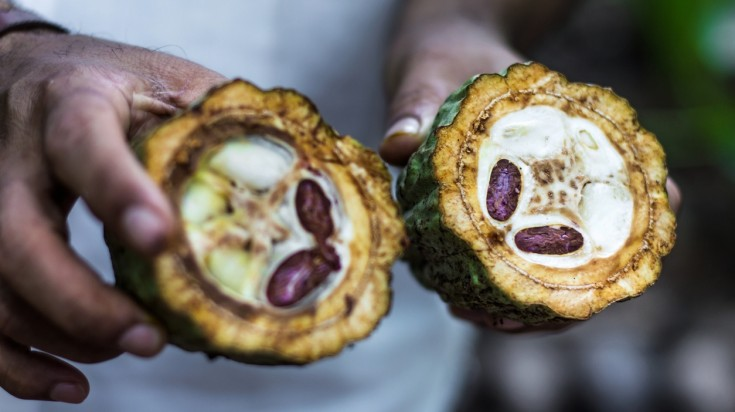 Cocoa beans things to do in costa rica