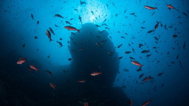 Cocos Island is a great place for diving in Costa Rica to witness fishes