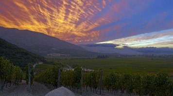 Clos Apalta vineyard at sunset in Colchagua Valley