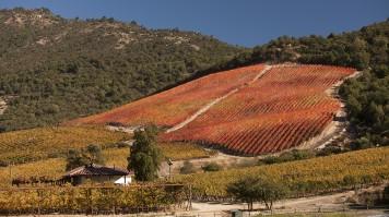 Carmenere Hill in Lapostolle winery