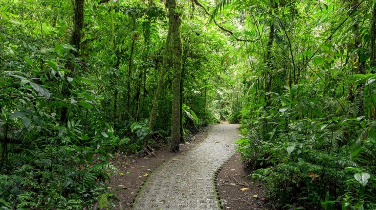 Hiking trail in Monteverde Cloud Forest Reserve