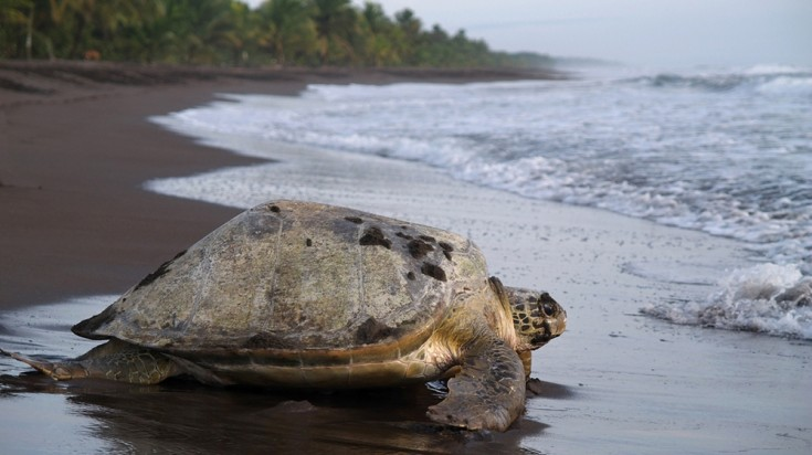 Costa Rica itinerary from Tortuguero