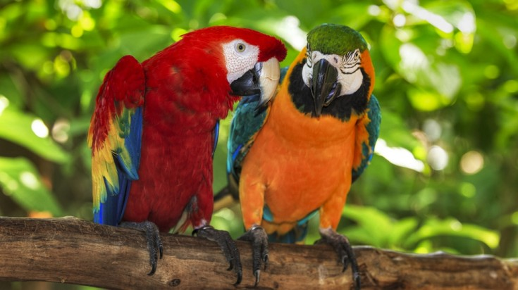 Costa Rica itinerary with wildlife visit