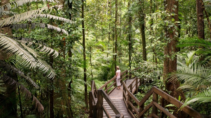 Daintree National Park is among the earth's oldest ecosystems.