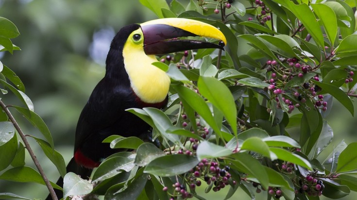 Day trips from San Jose Costa Rica Toucan
