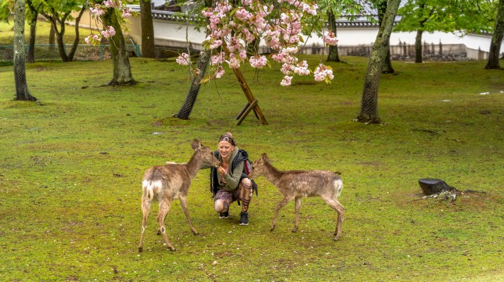 The Nara park in Nara is home to hundreds of freely traveling deer.