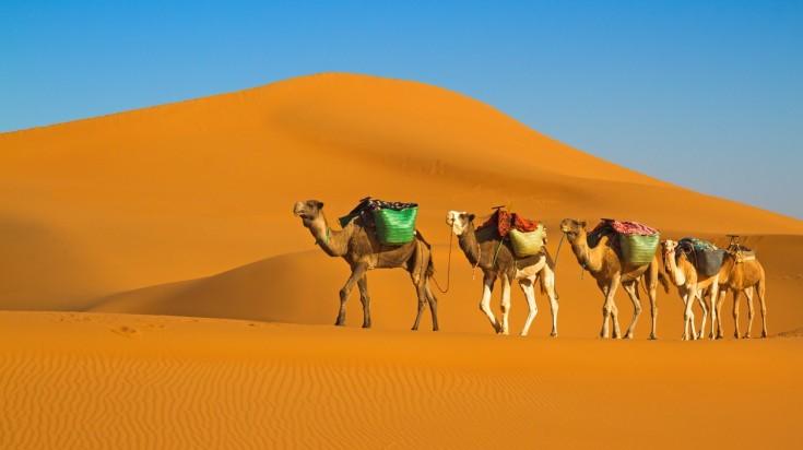 Camel riding on a desert safari in Dubai
