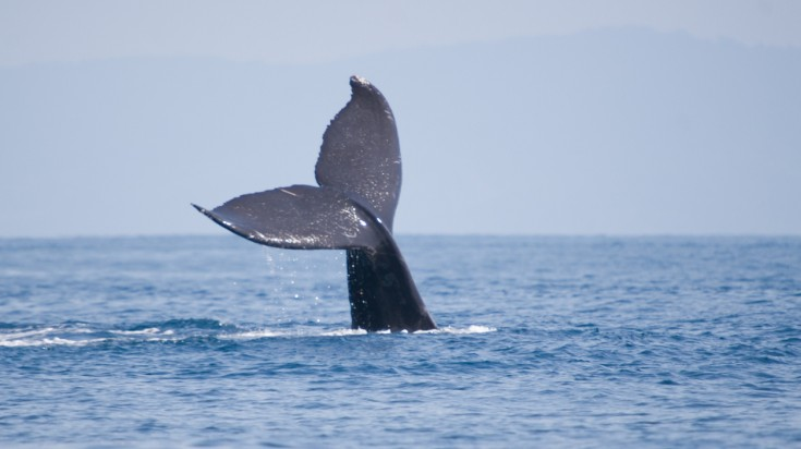 Eco tourism in Costa Rica - go whale watching