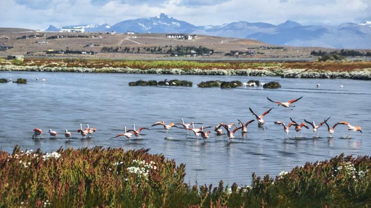 Laguna Nimez Reserve in El Calafate