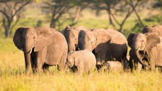 Elephants of Selous Game Reserve