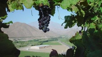 Vina Falernia in Elqui Valley