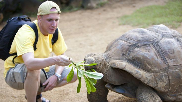 The giant tortoises on the Prison Island