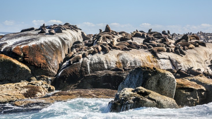 Seal Island in Gansbaai