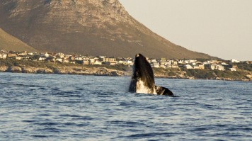 Whale Watching in Garden Route National Park
