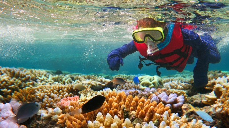 Snorkeling is the main thing to do in Great Barrier Reef