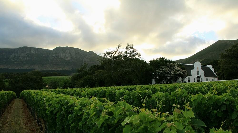Wine Tasting in Cape Town: The Ultimate Guide | Bookmundi