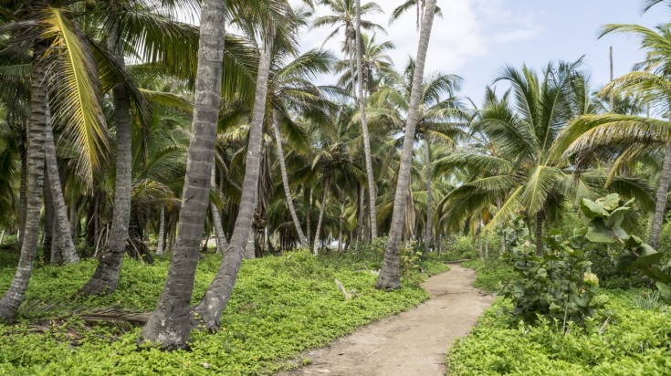Hiking trails can be found at Tayrona National Park