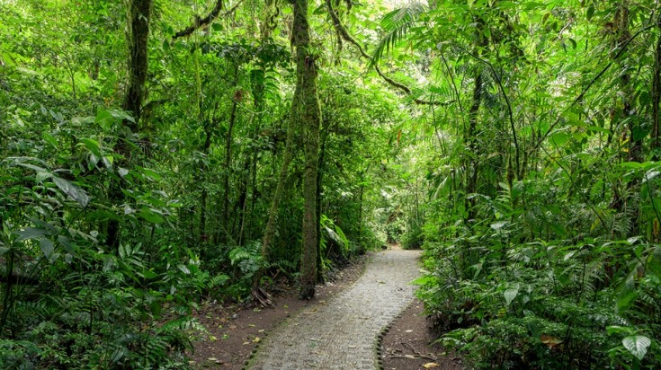 Monteverde is one of the richest natural places to hike in Costa Rica.