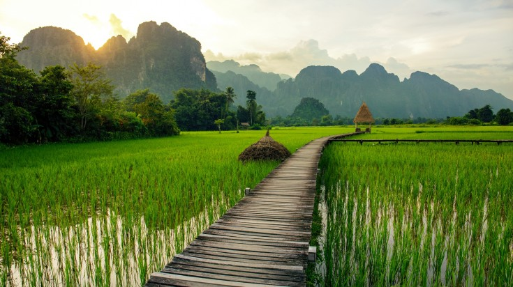The peaceful afternoon in the green rice fields of Vang Vieng
