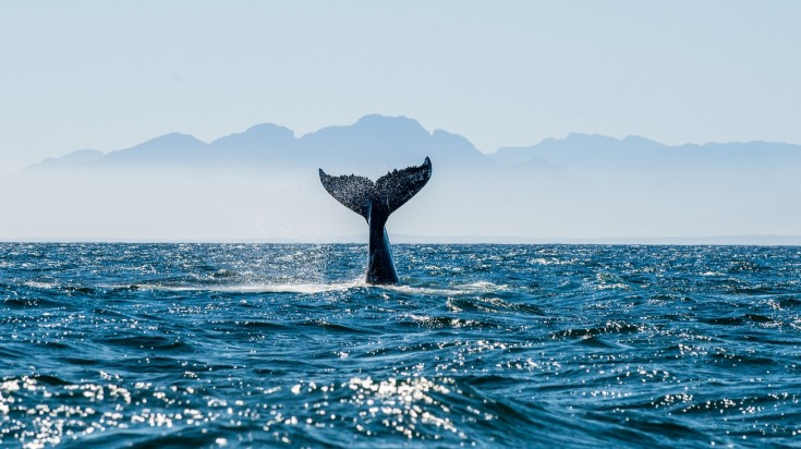 Whale watching in Costa Rica is the finest in Marino Ballena