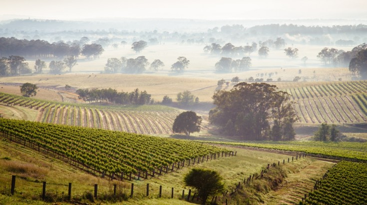 Visit Hunter Valley during spring to witness the fresh greenery.