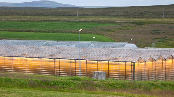 Potatoes are a staple in Iceland food and are grown in greenhouses