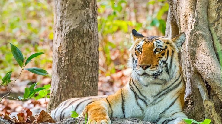 Tiger Safari in Jim Corbett National Park