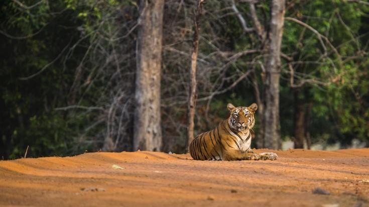 Tiger safari in Tadoba National Park